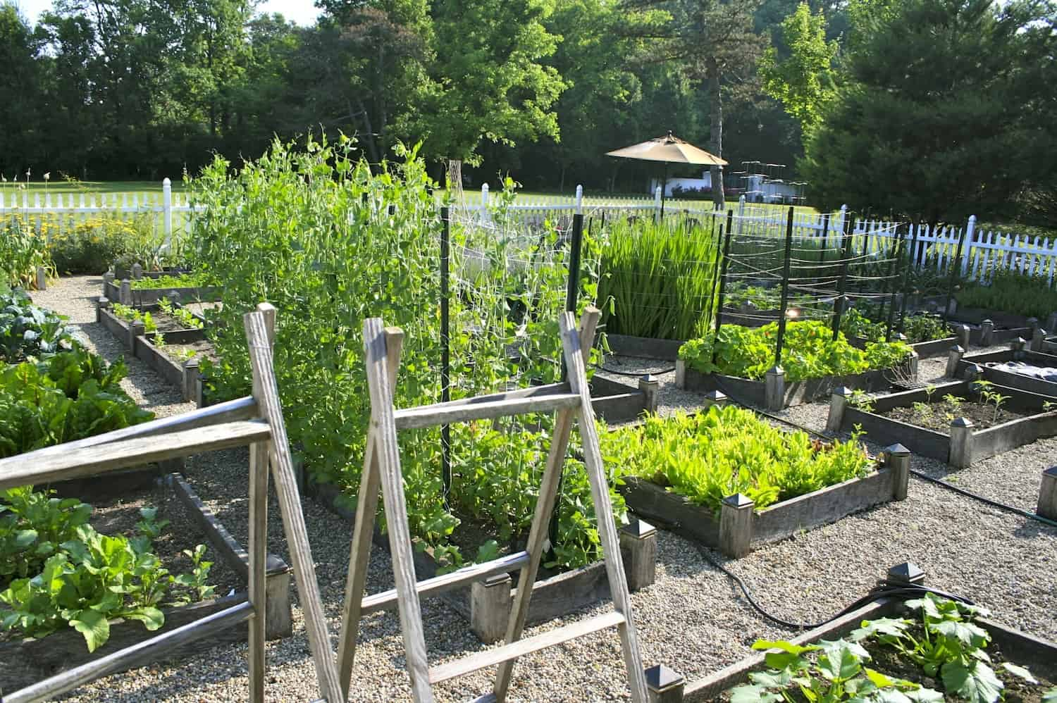 Vegetable Garden Design Ideas had a full shade vegetable garden in