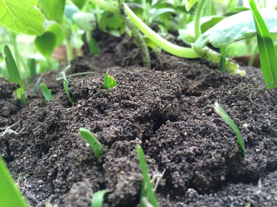 Garden soil supports microbe life