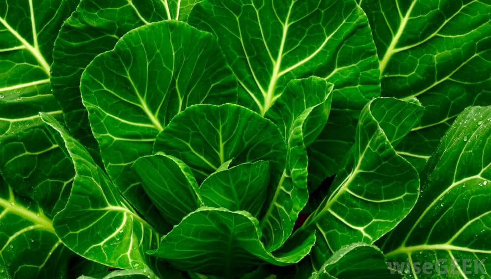 High-value vegetables