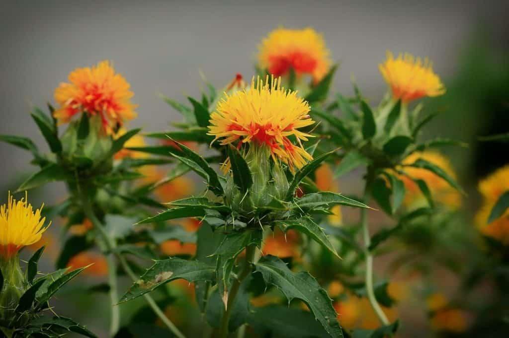 7 Natural Ways to Kill Weeds 3 Crabgrass (2)