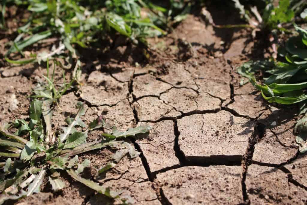 7 Natural Ways to Kill Weeds 4 (1)