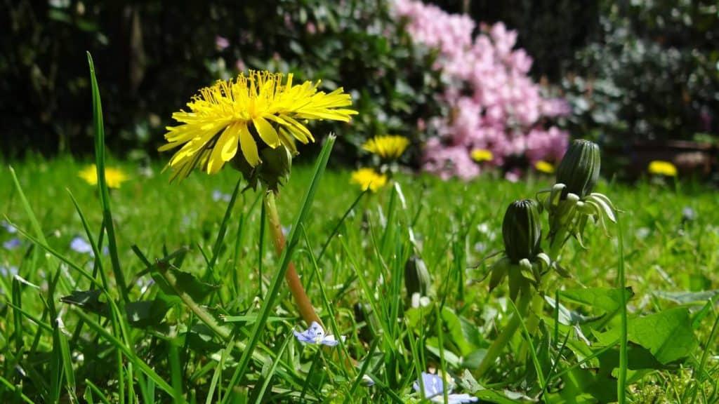 7 Natural Ways to Kill Weeds 7 (1)