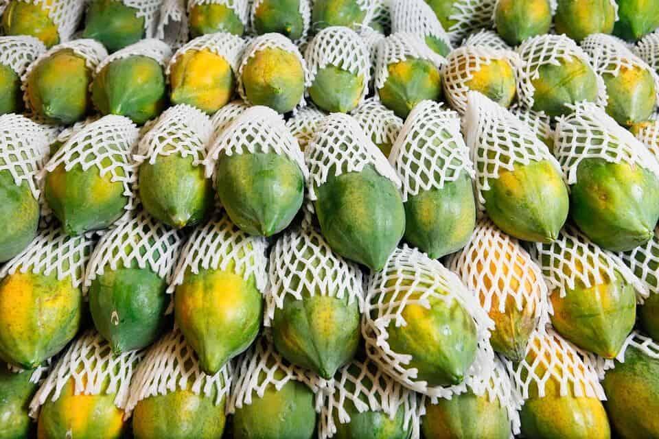fresh export market