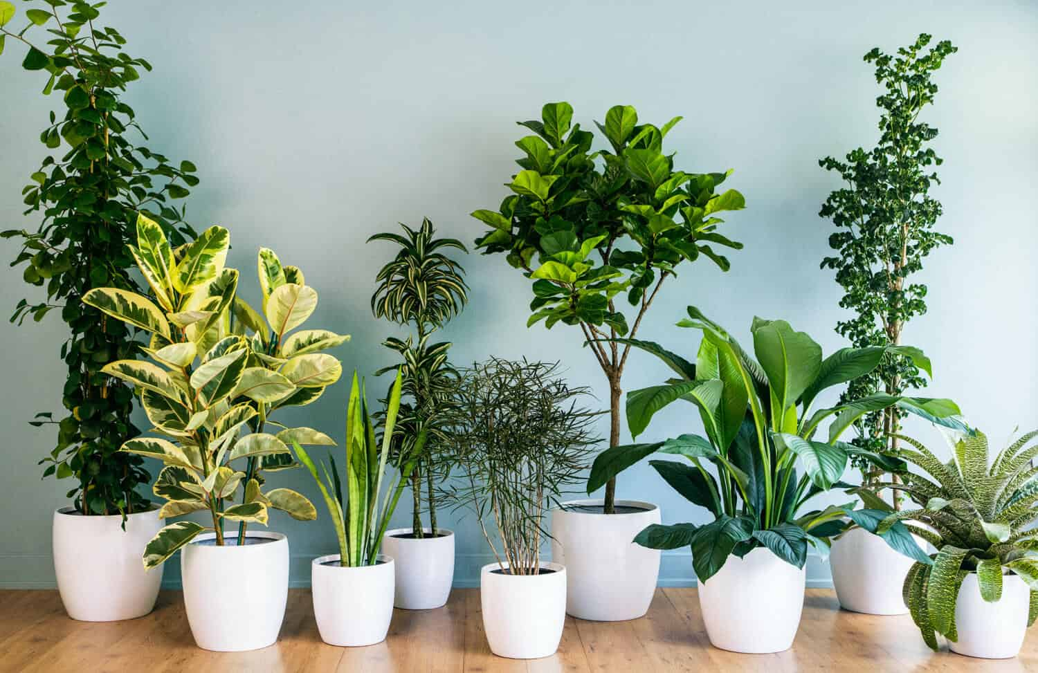 Tall House Plants Low Light 31 low light houseplants that you shouldn't miss out | hort zone