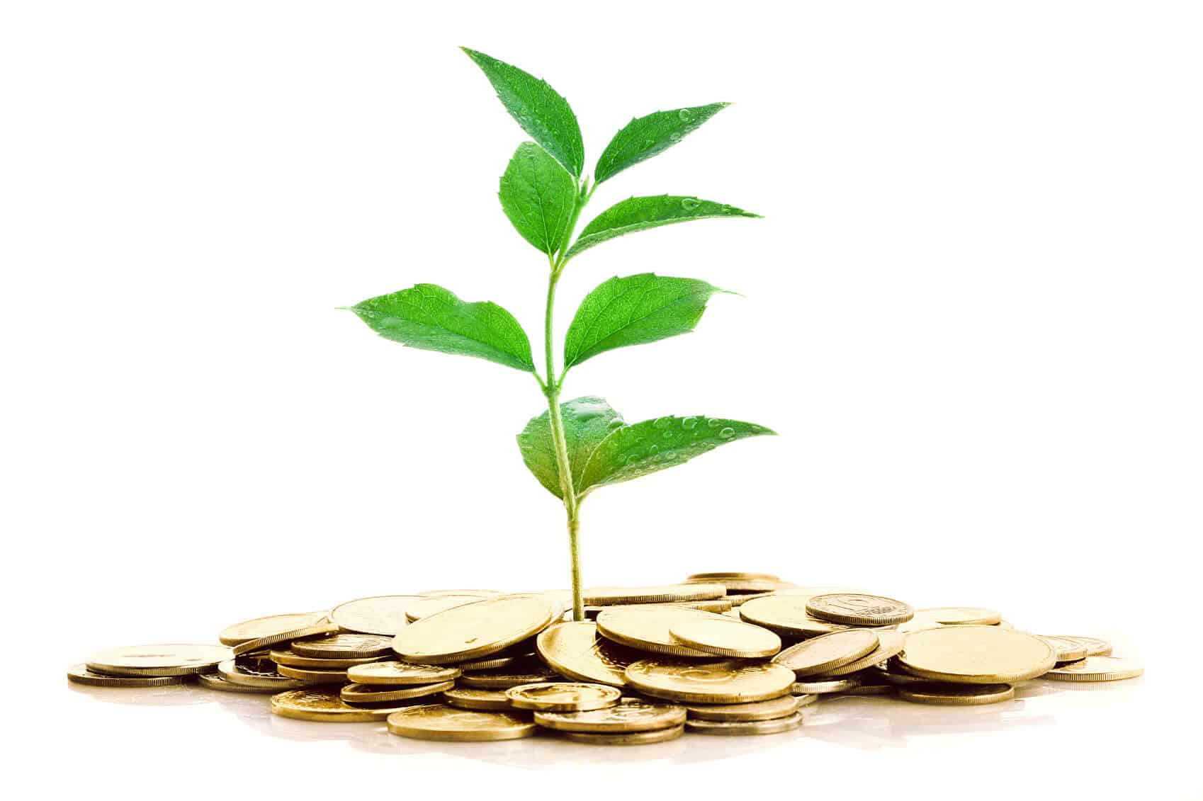 Make big money farming