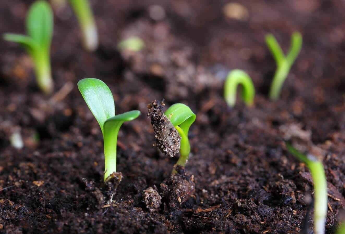 Ignore This 12 Forgotten Organic Farming Tips at Your Peril