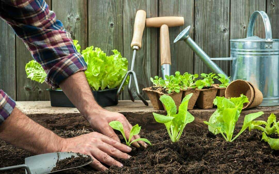 Actionable Tips for Composting through the Winter
