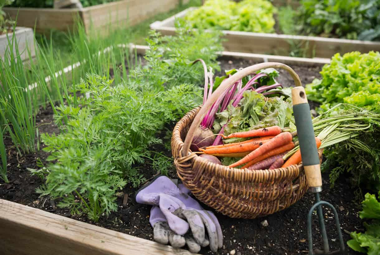 Easiest vegetables to grow featured hort zone for Easiest vegetables to grow