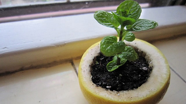 Vegetable Gardening: Remarkable Hacks for Growing Vegetables at Home