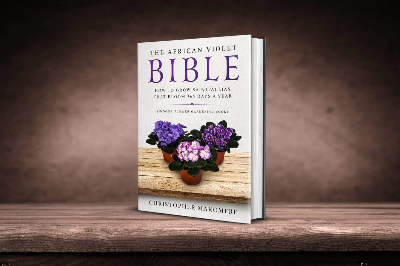 The African violet Bible