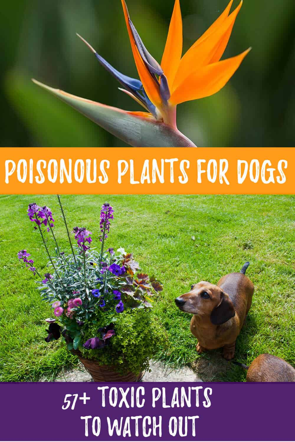 Poisonous Plants for Dogs: 51+ Toxic Plants to Watch Out