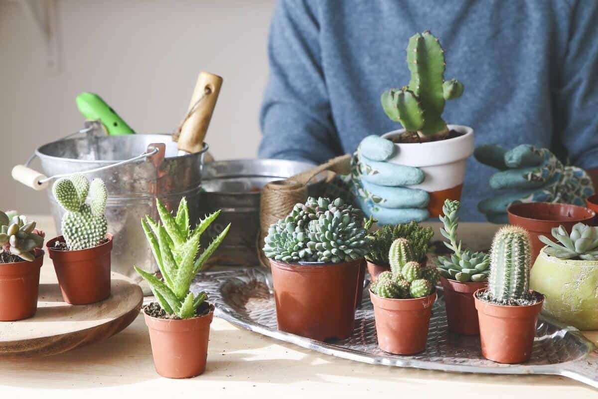 13 Effective Ways to Save a Dying Cactus Fast