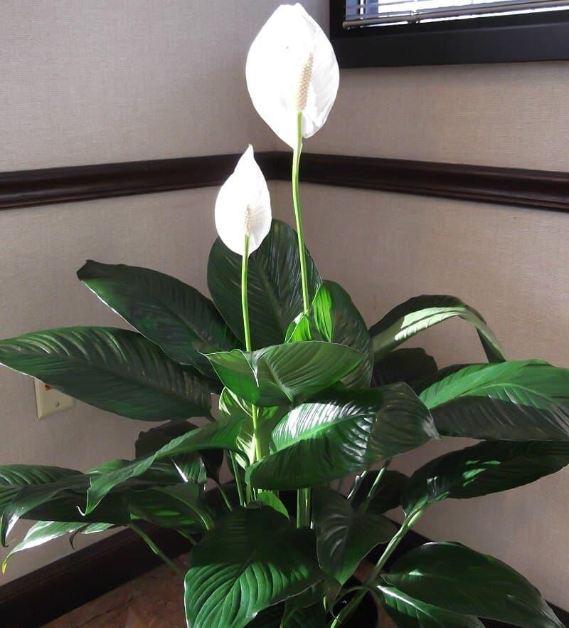 low light houseplants
