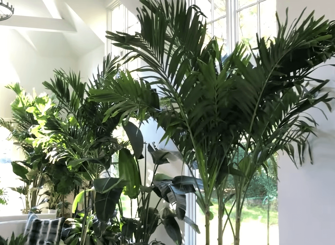 the large indoor plants