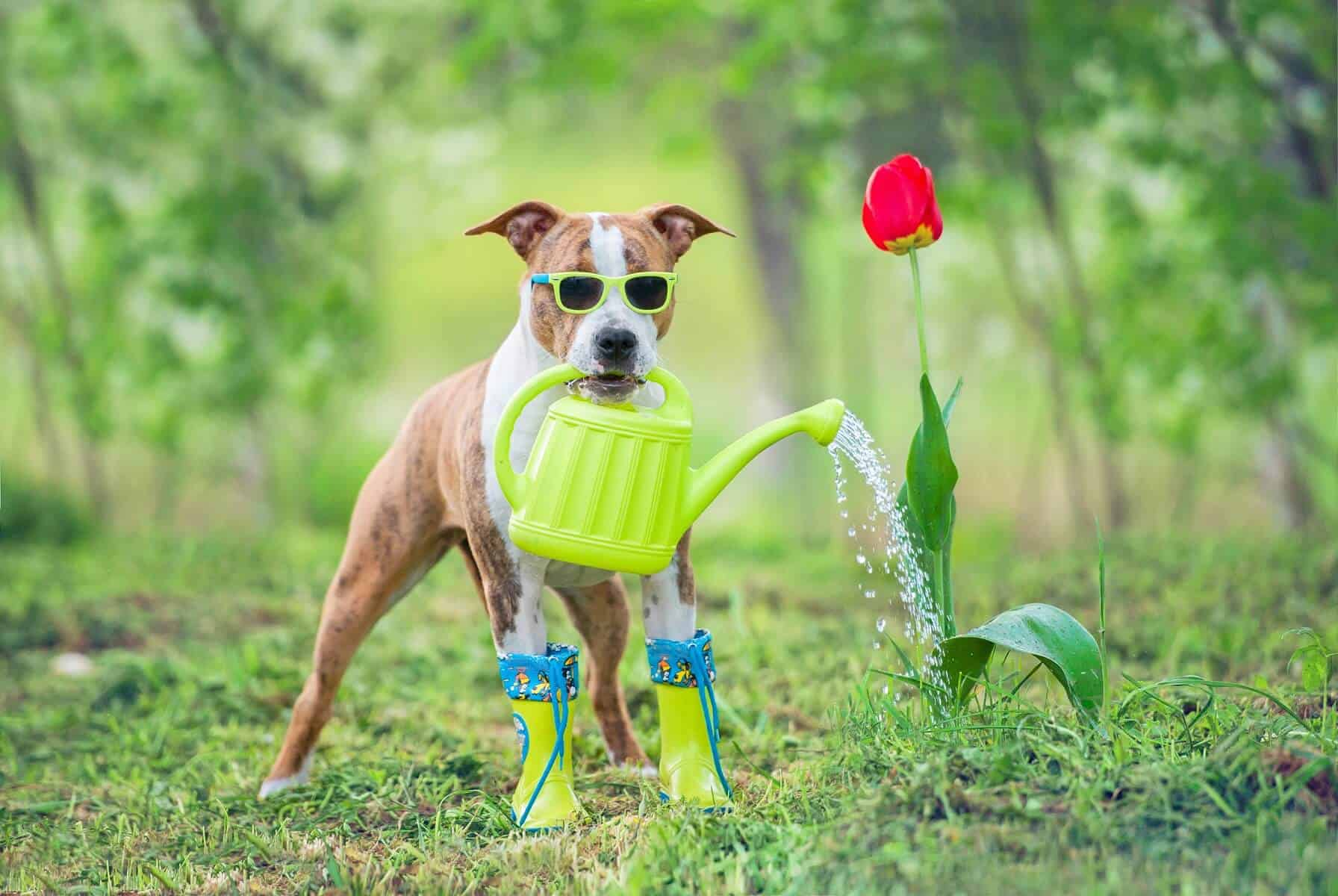 natria products safe for pets