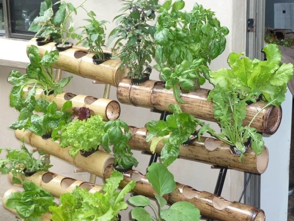 Vertical garden plants featured