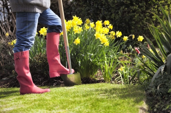 Why You Should Deadhead Daffodils After They Bloom Featured (1)