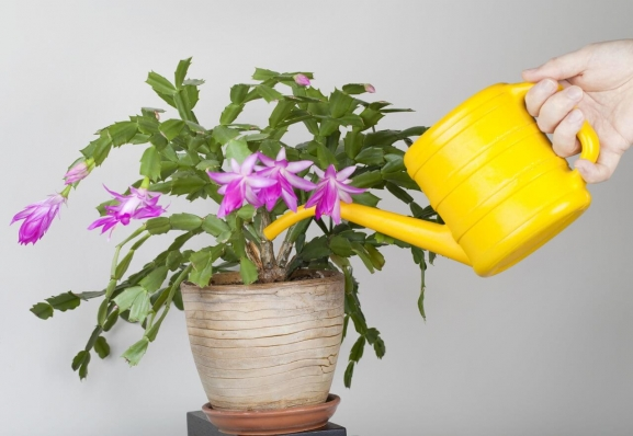 How to water potted plants featured
