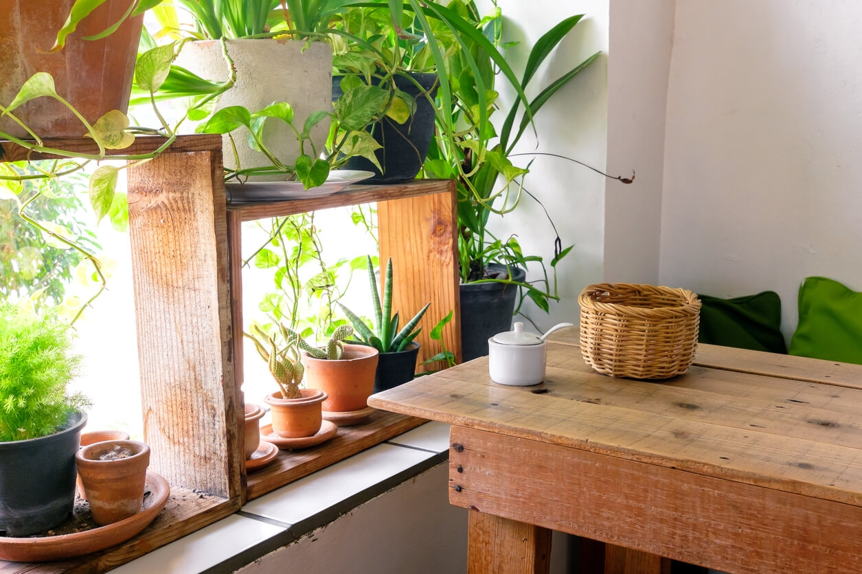 Houseplants for Improving Indoor Air Quality Featured