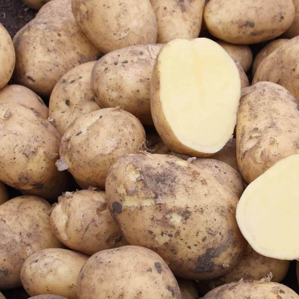 Markies New Potato Variety