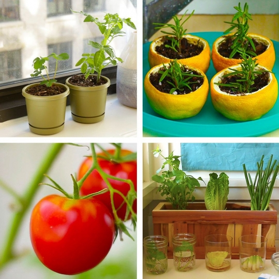 Vegetable Gardening Featured