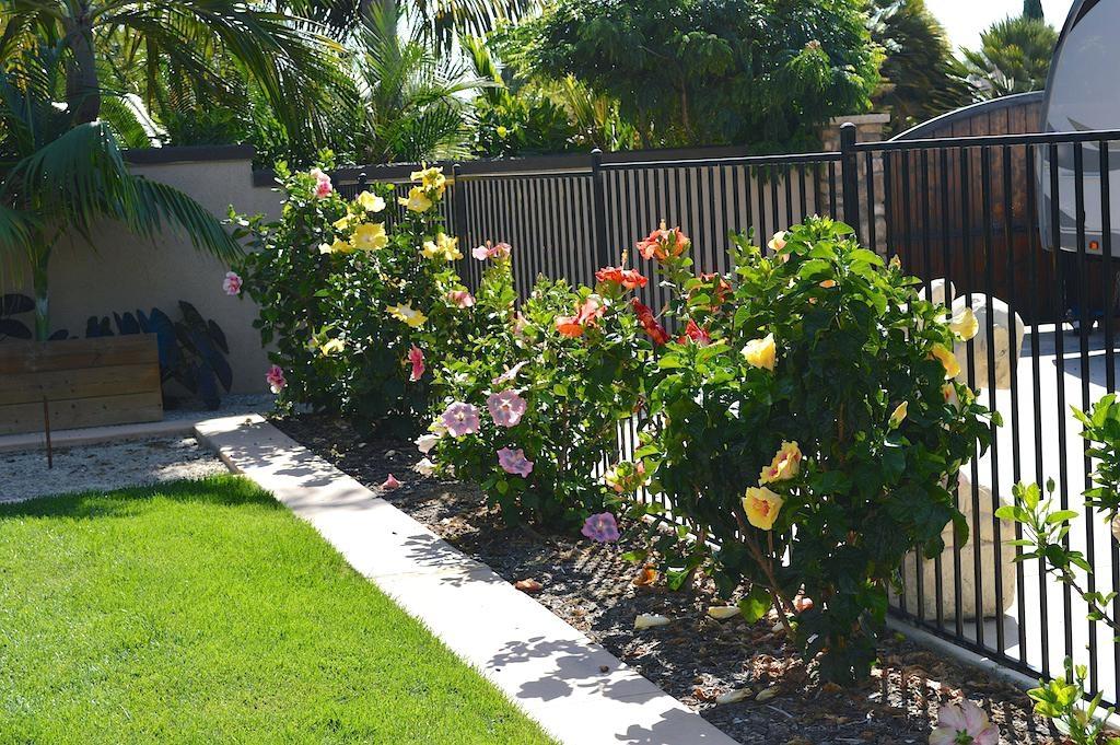 Hibiscus plant care featured