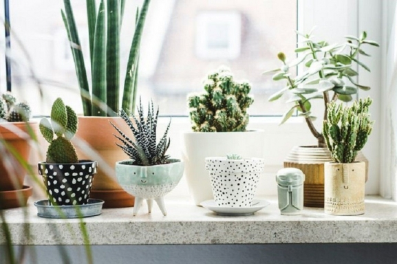 13+ Best Indoor Pot Planters for Home Decoration