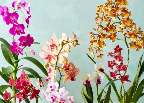 27 Indoor Flowering Plants - The Complete List