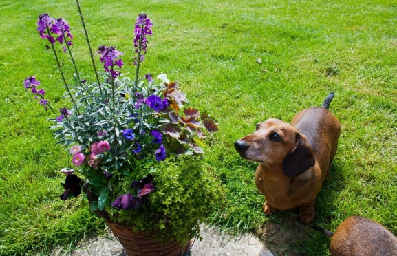Poisonous Plants for Dogs Featured